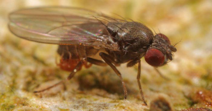 Reveladora investigación chilena muestra cómo insectos evolucionan ante el cambio climático