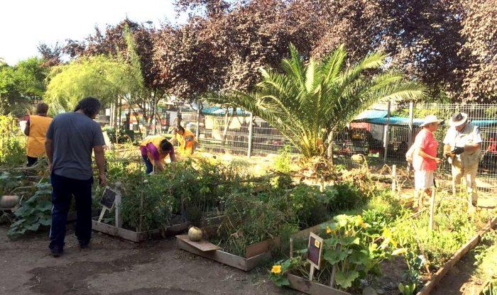 Iniciativa que apoya huertos familiares logra aumentar 93% el consumo de legumbres y hortalizas