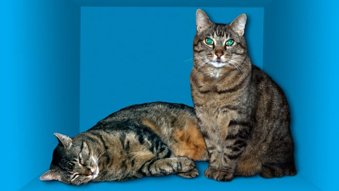 Cómo encontraron la forma de salvar al gato de Schrödinger, el experimento más famoso de la física cuántica