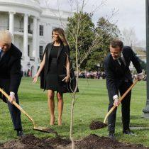 """¿Un presagio? Fallece """"Árbol de la amistad"""" que fue plantado por Trump y Macron en la Casa Blanca"""