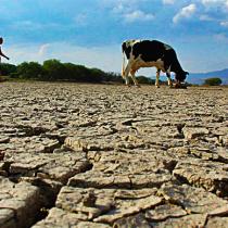 Desertificación en Chile: la urgente protección de los ecosistemas de transición