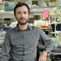 Investigación liderada por Claudio Hetz saca portada en prestigiosa revista Nature Cell Biology