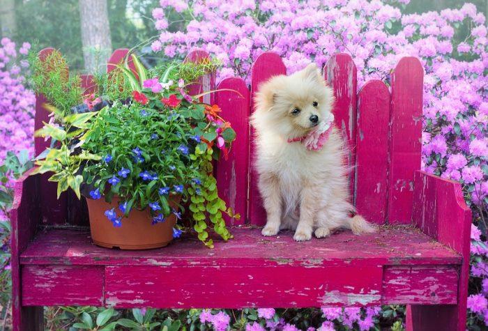Experta entrega consejos al perfumar a los perros