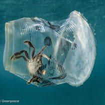 """Greenpeace en el Día Mundial de los Océanos: """"Los mares se están ahogando en plástico"""""""