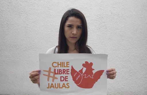 #ChileLibredeJaulas: la campaña que muestra el hacinamiento de las gallinas
