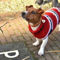 Las mascotas también pasan frío: ¿es necesario abrigarlas?