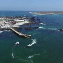 Escolares de Punta de Choros dibujan la biodiversidad y el mar para fomentar la protección del medioambiente en la zona