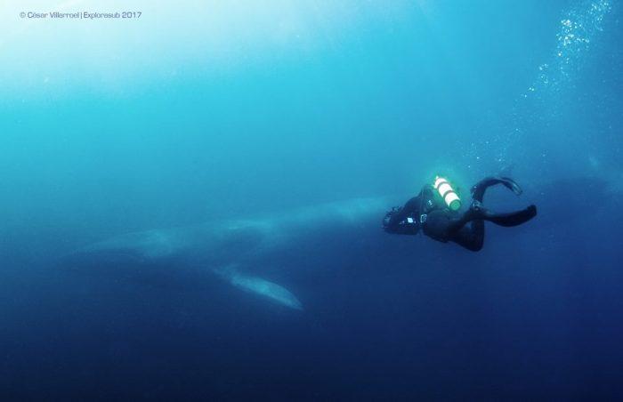 """""""Archipiélago de Humboldt, paraíso en peligro"""": documental reinstala conflicto de minera Dominga ad portas de la COP25"""