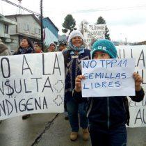 Gobierno posterga consulta indígena en Ercilla por