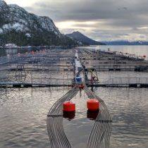 Salmon Leaks: ¿Dónde está la Salmonicultura 2.0?