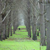 Plantaciones forestales, cambio climático y la restauración de ecosistemas: el falso discurso