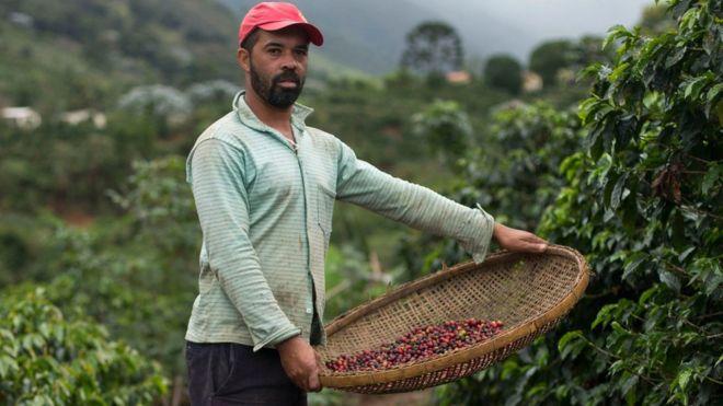 Cómo te puede afectar la crisis mundial del café