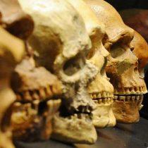 Grecia: identifican al Homo sapiens no africano más antiguo