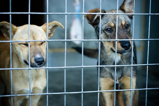 #NoSonMuebles: la campaña para reconocer animales como seres