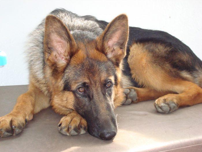 Cave Canem (Cuidado con el perro)