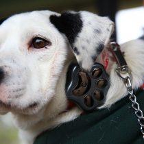 Entregan en adopción primeros perros con GPS inteligente