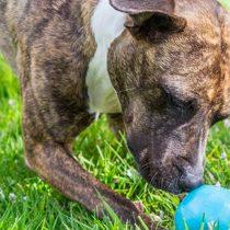 Hacer regalos a las mascotas: la creciente tendencia que se toma el Día Mundial del Perro