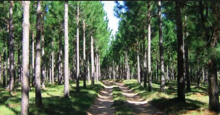 Carbono, sustentabilidad forestal y realismo económico