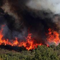 Bosques, incendios y crisis climática