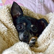 ¿Cómo proteger a las mascotas del frío del invierno?