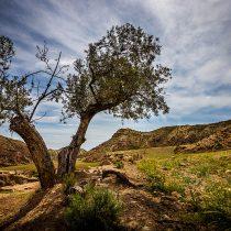 Desafíos climáticos de cara a la COP25: a propósito del anteproyecto de ley de cambio climático