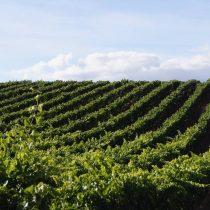 Viñas chilenas elegidas dentro de los mejores 50 viñedos del mundo