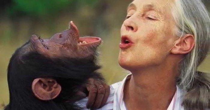 """Primatóloga Jane Goodall: """"El mayor problema es la codicia"""""""