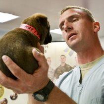 Solicitan mantener atención de clínicas y farmacia veterinarias para apoyar salud pública