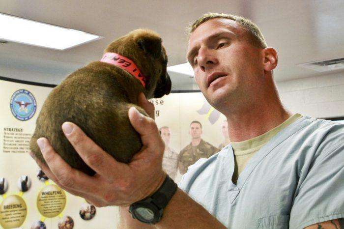 Cámara de Diputados aprueba a médicos veterinarios como profesionales de la salud