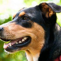 A propósito del Día Internacional del Perro