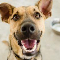 Fatiga por compasión: cuando cuidar de los animales puede llevarte a la depresión
