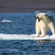 ¿Cuánto nos queda para salvar el planeta?