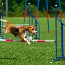 Animales exóticos y muestra de destreza canina se toman Colina en el Día del Niño