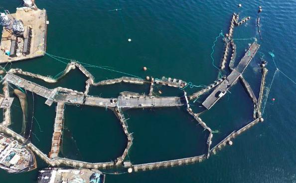 El impacto de la salmonicultura en la acidificación del mar y anoxia en La Patagonia chilena