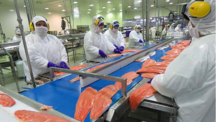 Nova Austral: la crítica viabilidad financiera de la salmonera que manipuló todos sus datos y alteró el fondo marino