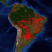 Paulo Moutinho, científico brasileño, ante la tragedia en la Amazonía: