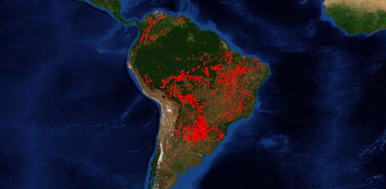 """Paulo Moutinho, científico brasileño, ante la tragedia en la Amazonía: """"Lo más urgente es detener la deforestación"""""""