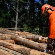 Rentas Regionales para la urgente inversión verde