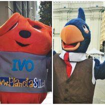 Guerra de corpóreos: Contralorito vs. Ivo, la chinchilla del SII