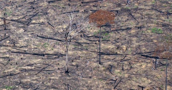Tras informe IPCC, Fundación Terram llama a regular la industria agrícola en Chile