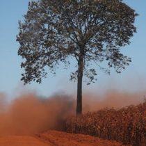 Incendios en el Amazonas: la alerta de los científicos de que gran parte de la Amazonía puede transformarse en sabana