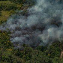 Leonardo DiCaprio anuncia US$5 millones para la Amazonía