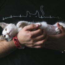 La importancia de la arena sanitaria en el cuidado de los gatos