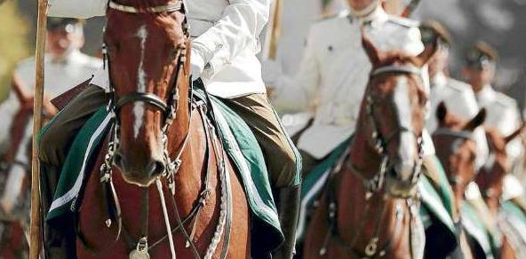 Ejército inicia investigación para aclarar desaparición de dos caballos fina sangre desde Regimiento