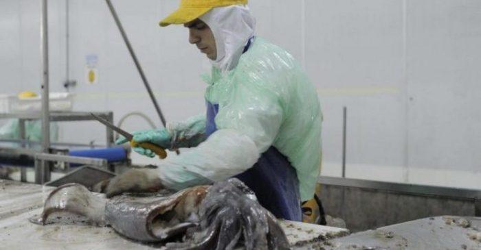 Empresa Landes desvincula a 232 trabajadores y compara la ley de la jibia con el terremoto del 2010