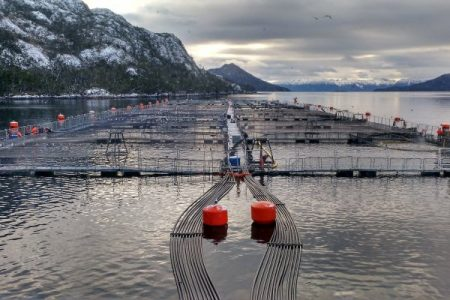 Otra vez la industria salmonera: el escándalo de Nova Austral y la desprotección de nuestros mares