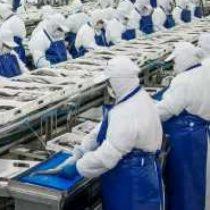 367 trabajadores son despedidos de empresa PacificBlu tras entrada en vigencia de la Ley de la Jibia