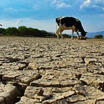 Sondeo sobre crisis ambiental de Adimark sitúa la escasez hídrica y la sequía como los principales problemas ambientales del país