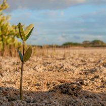 Cómo la escasez de agua estaría afectando la agricultura de nuestro país