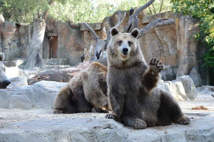 ¿Cerrar o mantener? El largo debate por los zoológicos en Chile